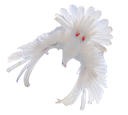 белый голубь, голубь мира, фауна, птицы, голубь, bird, dove, vogel, taube, faune, oiseau, colombe, pájaro, paloma, uccello, colomba, fauna, pássaro, pomba