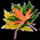 осенние листья, желтые листья клена, зеленые листья клена, autumn leaves, yellow maple leaves, green maple leaves, blätter im herbst gelb ahornblätter, grüne blätter von ahorn, feuilles d'automne, feuilles d'érable jaune, feuilles vertes de l'érable, hojas de otoño, hojas de arce amarillas, hojas verdes de arce, foglie di autunno, foglie di acero giallo, verde foglie di acero, folhas de outono, folhas de bordo amarelas, folhas verdes de bordo