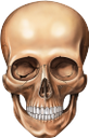 череп, череп человека, skull, human skull, schädel, menschlicher schädel, crâne, crâne humain, cráneo, cráneo humano, teschio, teschio umano, crânio, crânio humano, череп людини