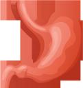 медицина, органы человека, анатомия, желудок, внутренности человека, части тела, тело человека, medicine, human organs, anatomy, stomach, human insides, parts of the body, the human body, medizin, menschliche organe, magen, innere organe, teile des körpers, der menschliche körper, médecine, organes humains, anatomie, estomac, intérieur humain, parties du corps, corps humain, órganos humanos, anatomía, estómago, partes del cuerpo, el cuerpo humano, organi umani, stomaco, interni umani, parti del corpo, il corpo umano, medicina, órgãos humanos, anatomia, estômago, interior humano, partes do corpo, o corpo humano, органи людини, анатомія, шлунок, нутрощі людини, частини тіла, тіло людини