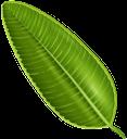 лист фикуса, зеленый лист, фикус, листья, флора, зеленый, leaf of ficus, green leaf, leaves, green, blatt von ficus, grünes blatt, blätter, grün, feuille de ficus, feuille verte, flore, feuilles, vert, hoja de ficus, hoja verde, hojas, foglia di ficus, foglia verde, foglie, folha de ficus, folha verde, ficus, flora, folhas, verde, лист фікуса, зелений лист, фікус, листя, зелений