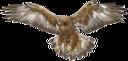 орел, хищная птица, семейство ястребиных, птицы, eagle, bird of prey, hawk family, birds, adler, greifvogel, falkenfamilie, vögel, aigle, oiseau de proie, famille de faucon, oiseaux, águila, ave de rapiña, familia halcón, pájaros, aquila, rapace, famiglia falco, uccelli, águia, ave de rapina, família falcão, pássaros, хижий птах, сімейство яструбиних, птиці