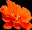 оранжевый цветок, цветы, флора, orange flower, flowers, orange blume, blumen, fleur d'oranger, fleurs, flore, flor de naranja, fiori d'arancio, fiori, flor de laranjeira, flores, flora, помаранчова квітка, квіти