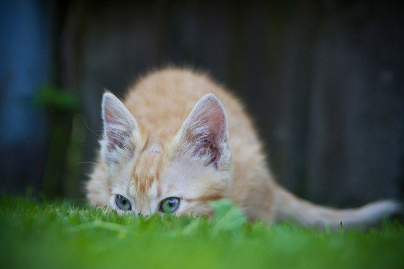 seeking cat on grass