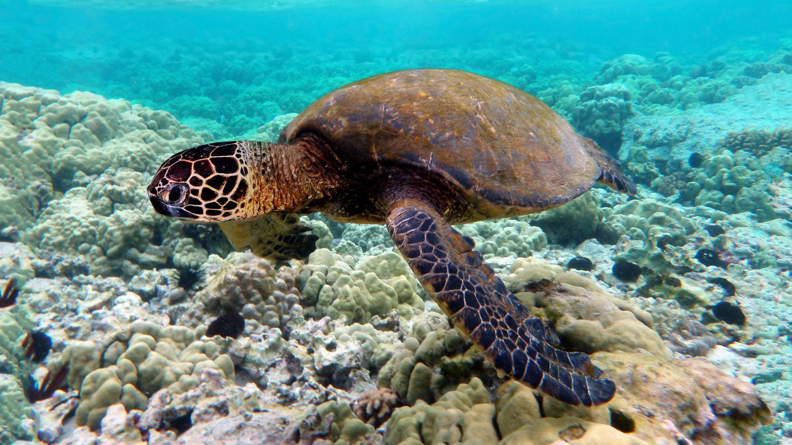 Estudio muestra que especies marinas sufren más el calentamiento global