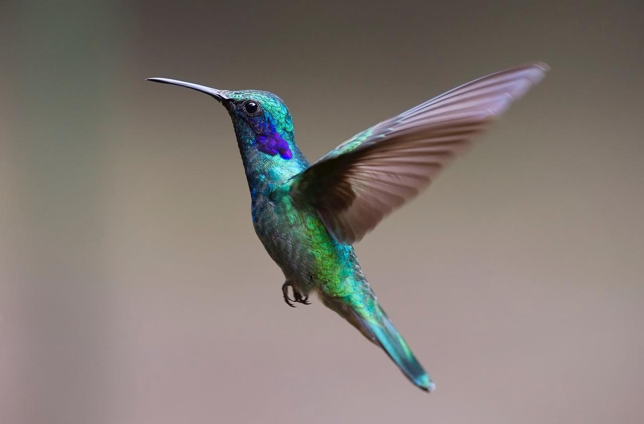 Crean dron con destrezas de un colibrí