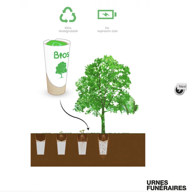 urnas ecológicas
