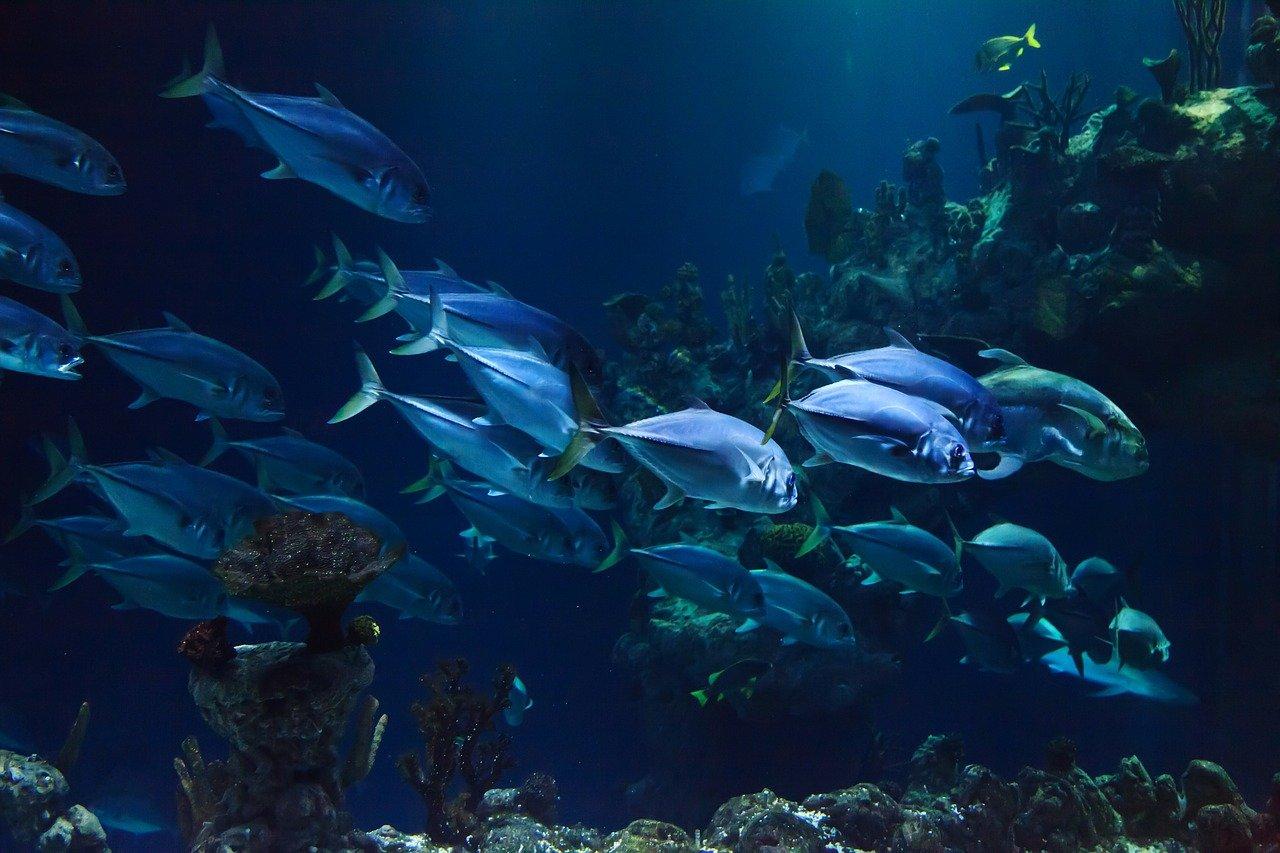 Bajo el mar (Imagen ilustrativa)/Foto; pixabay