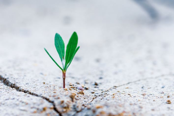 ecommerce-company-growth.jpg