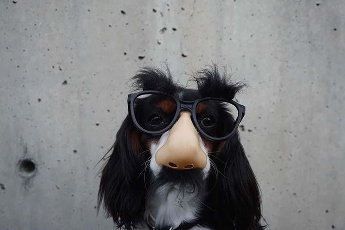 groucho-dog-braydon-anderson.jpg