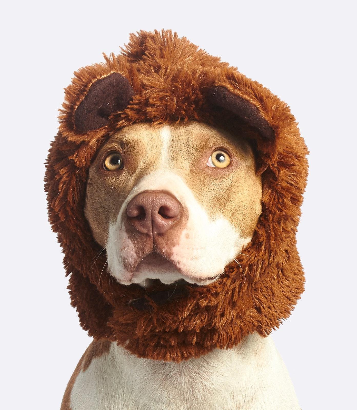 lion-dog.jpg