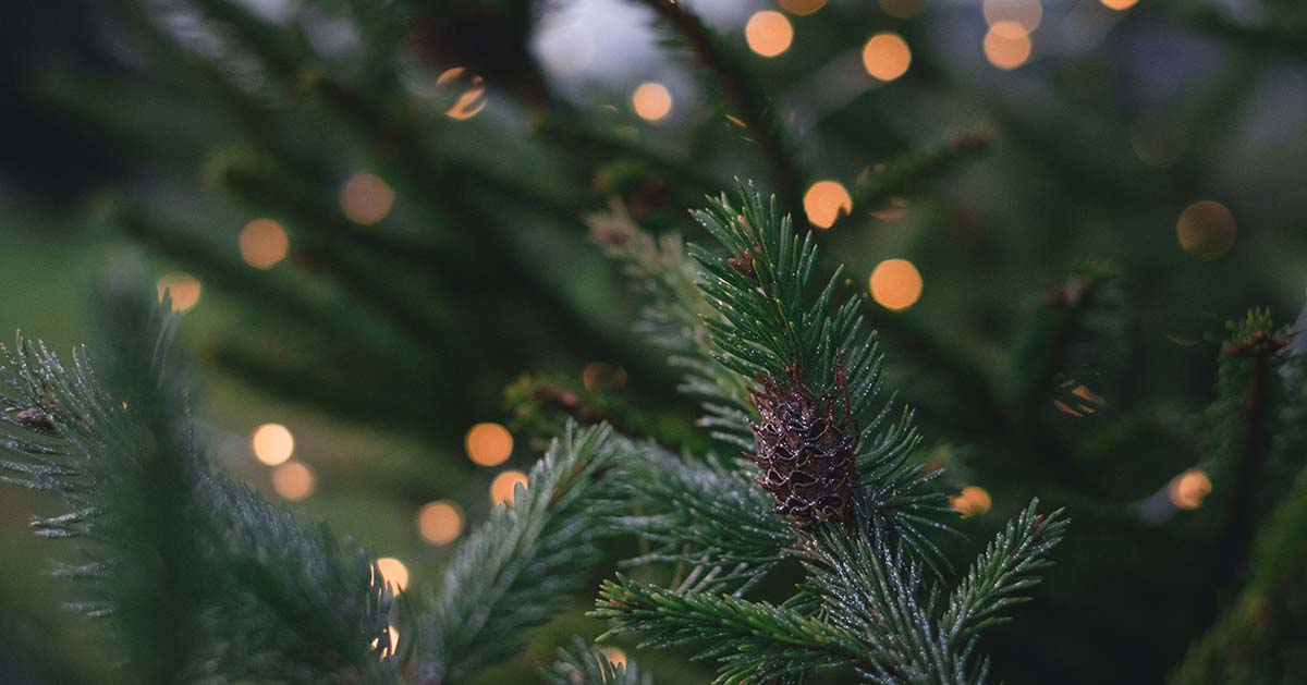 Lights and pine cone on tree