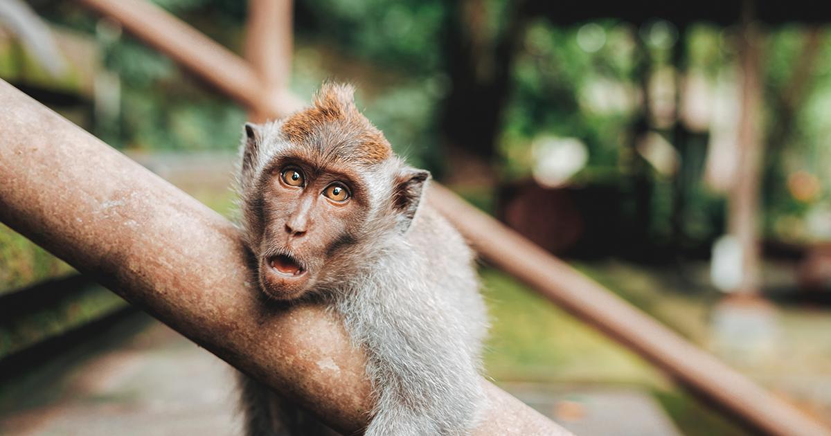 Surprised monkey in tree