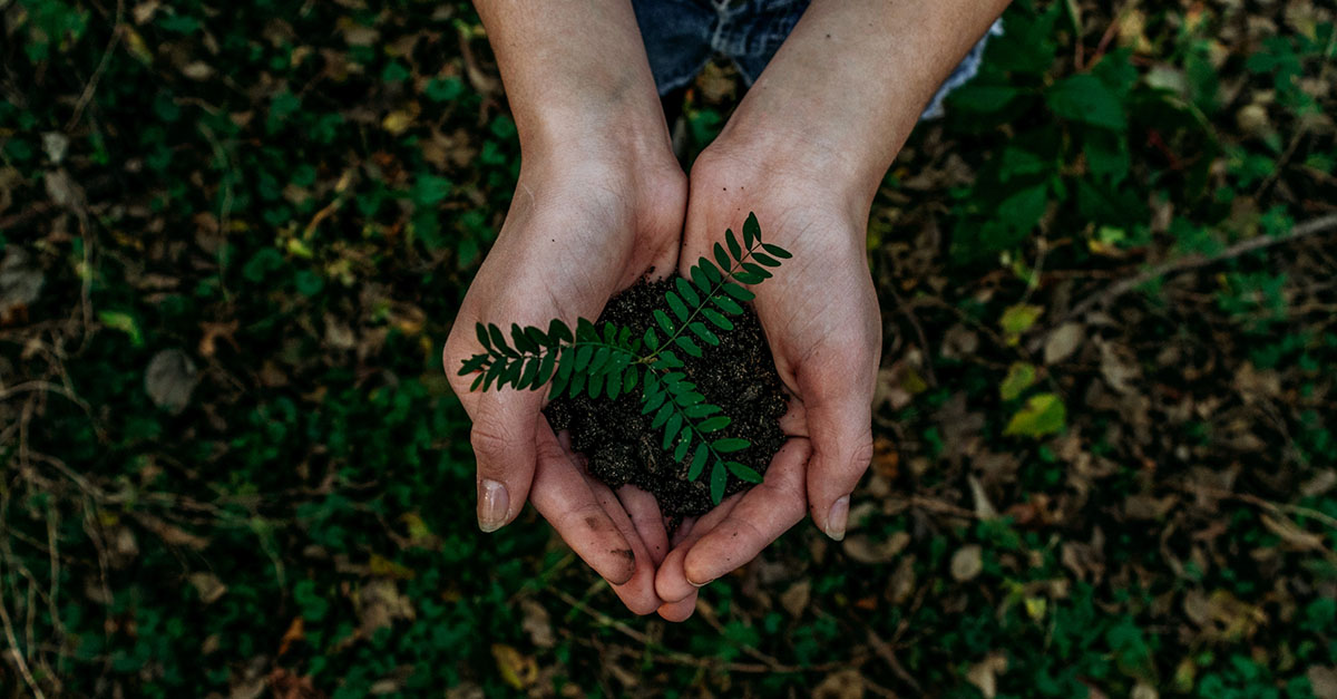 Female hands holding dirt and tree sapling