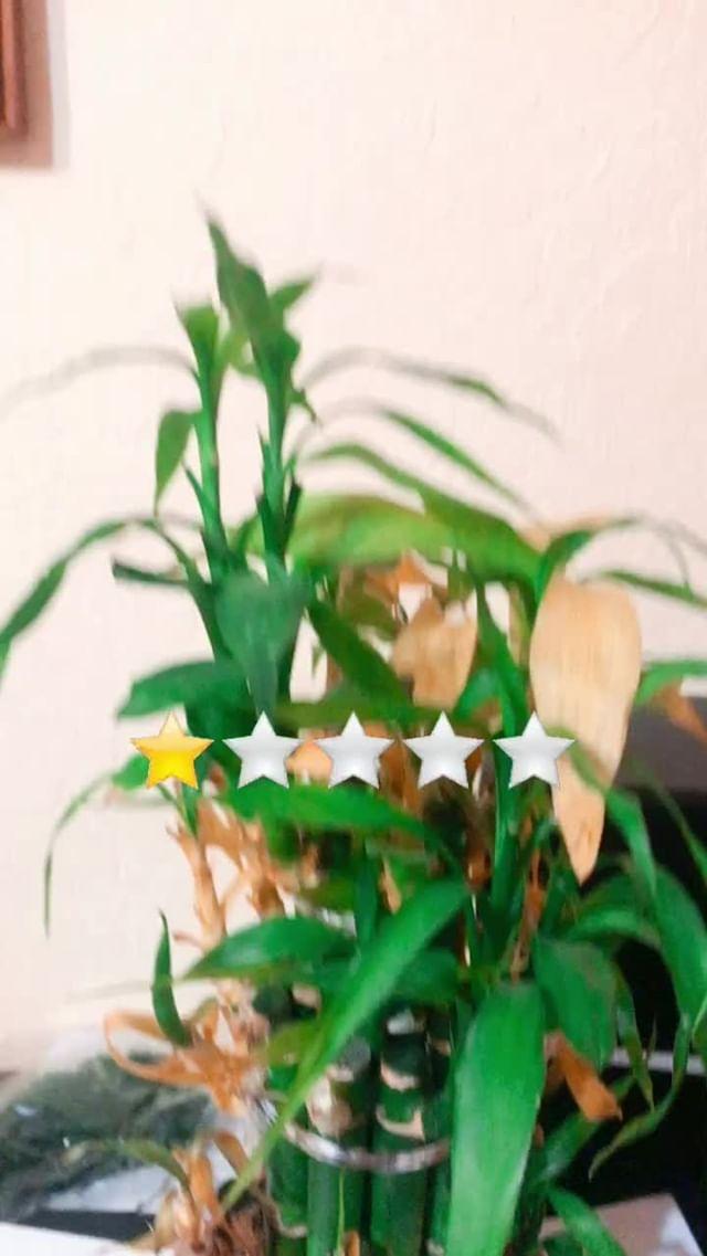 Instagram filter Star rating
