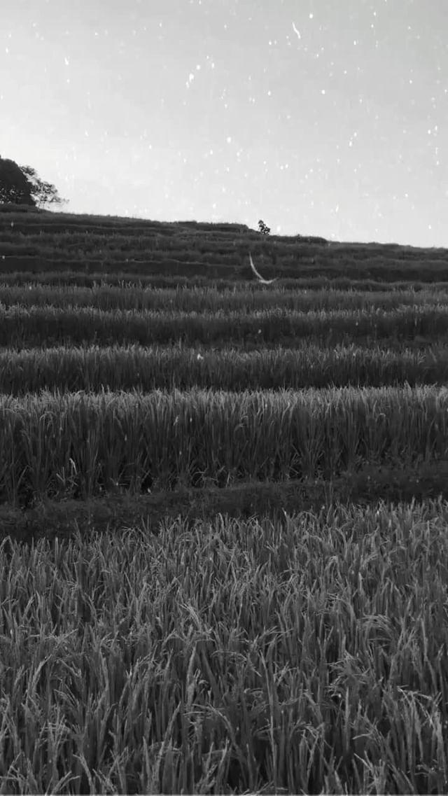Instagram filter Black White Film