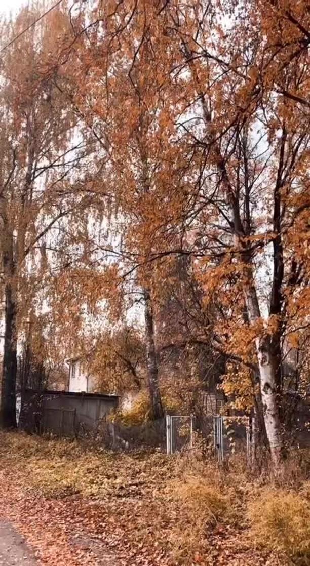 Instagram filter Autumn Insomnia