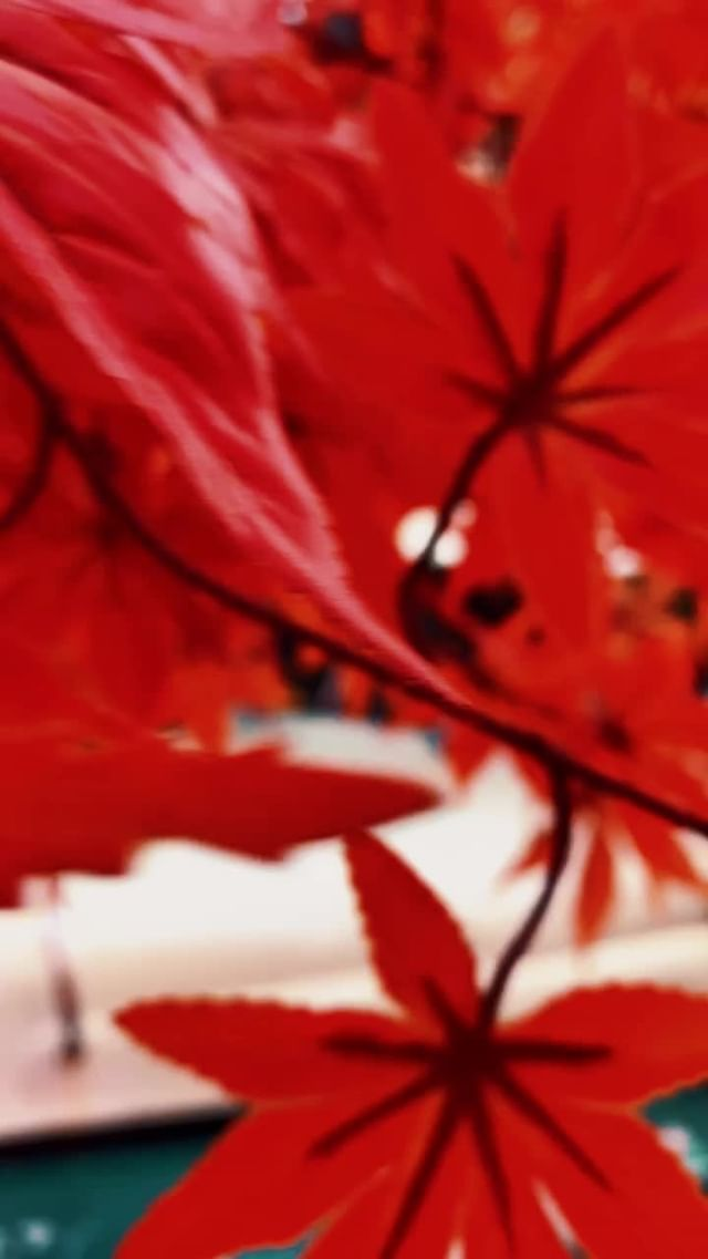 adriangirbovean Instagram filter RED