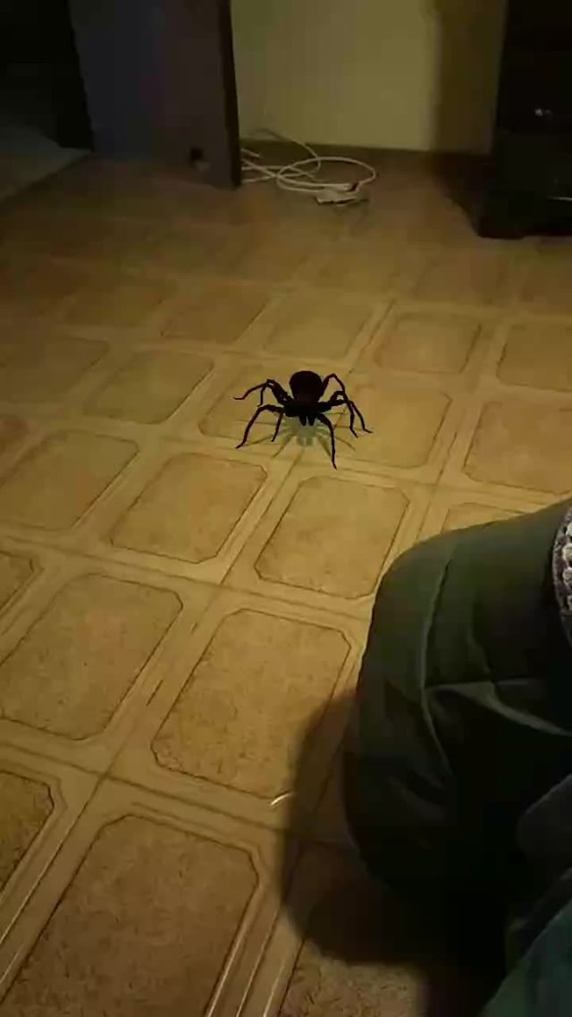 Instagram filter Tarantula