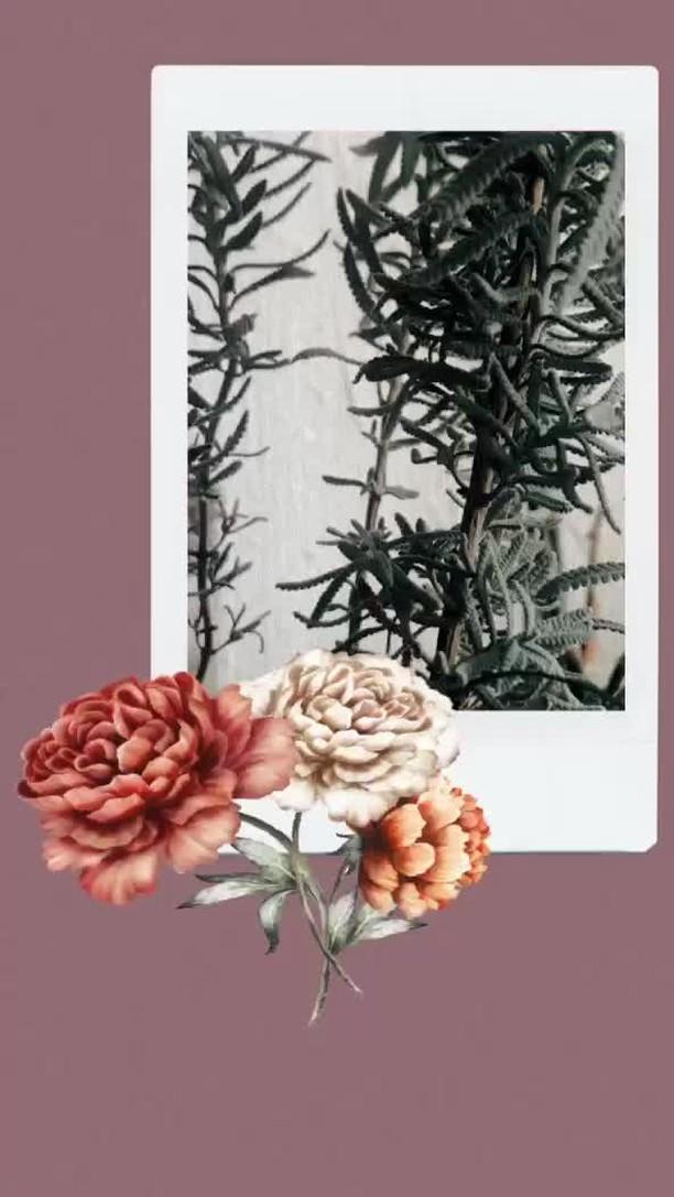 dianarodd Instagram filter Polaroid+Flowers