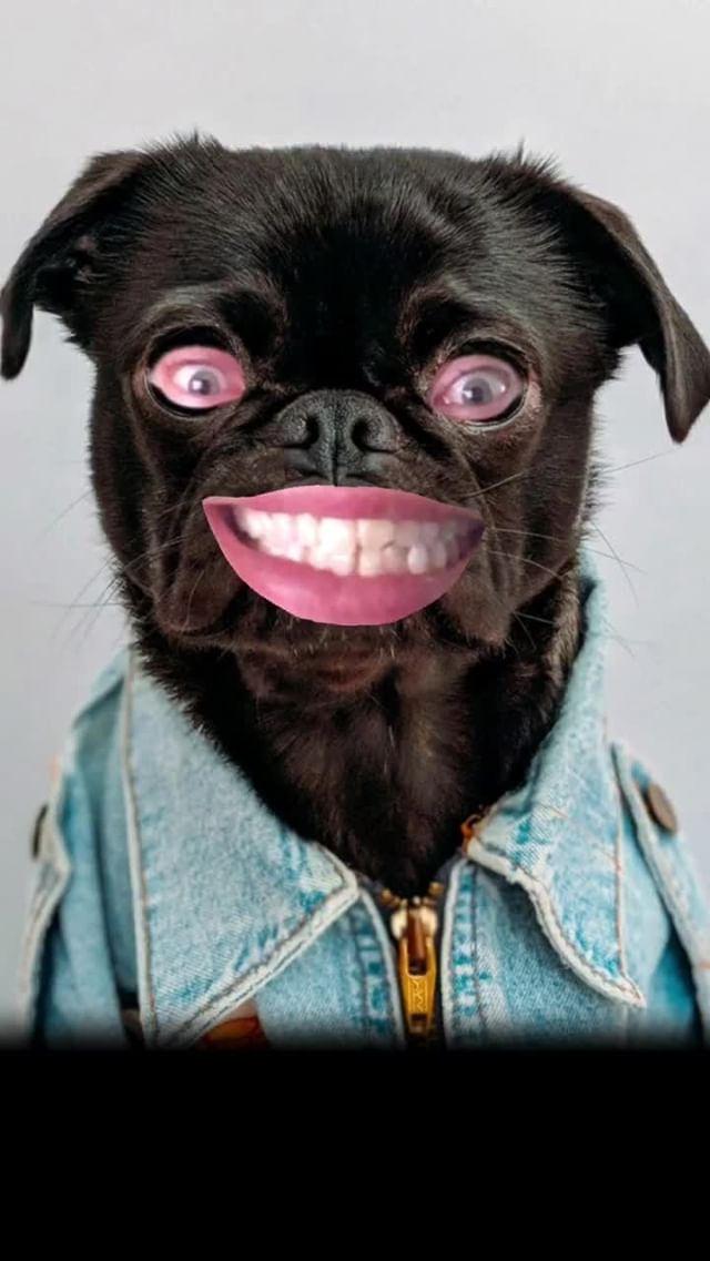 anonamister Instagram filter Face the Dogs