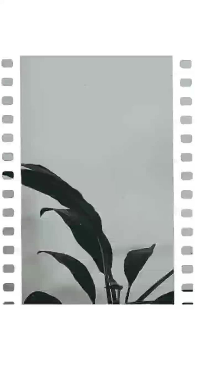 Instagram filter Film frames