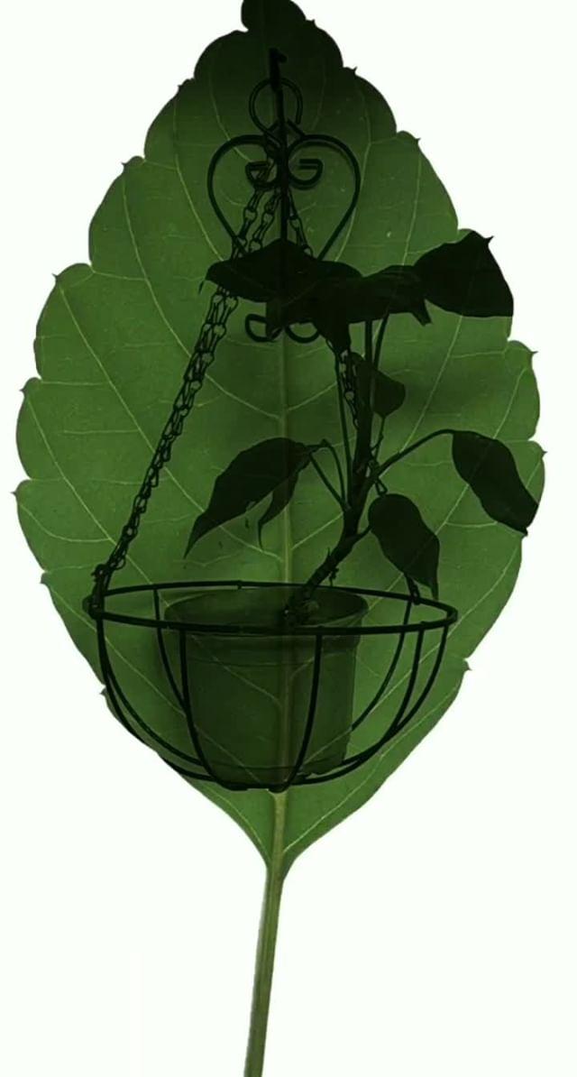 nahir.esper Instagram filter Chlorophyll