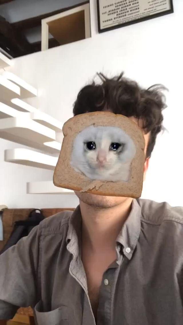 Instagram filter sad kitten toast