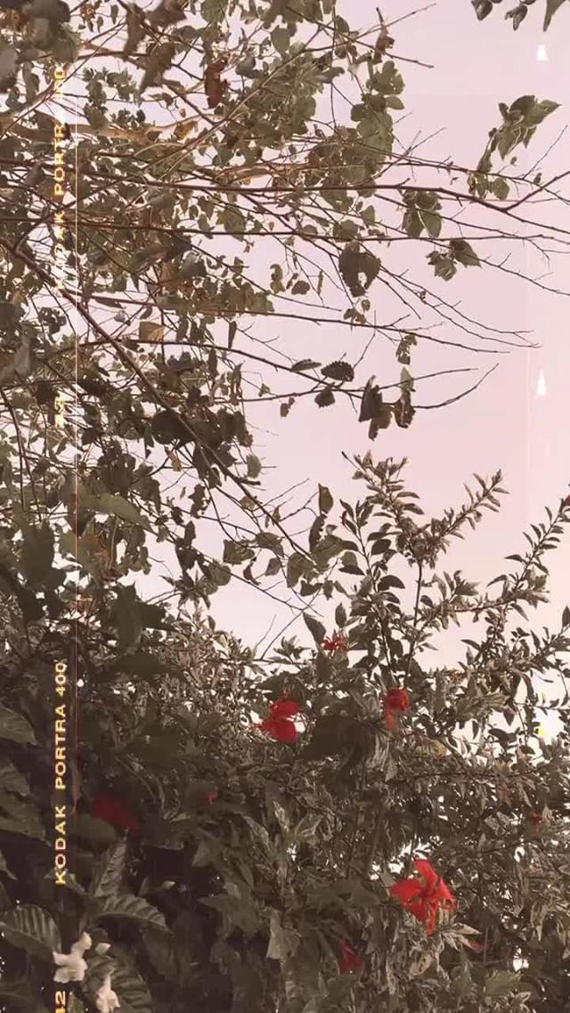 Instagram filter joshua tree
