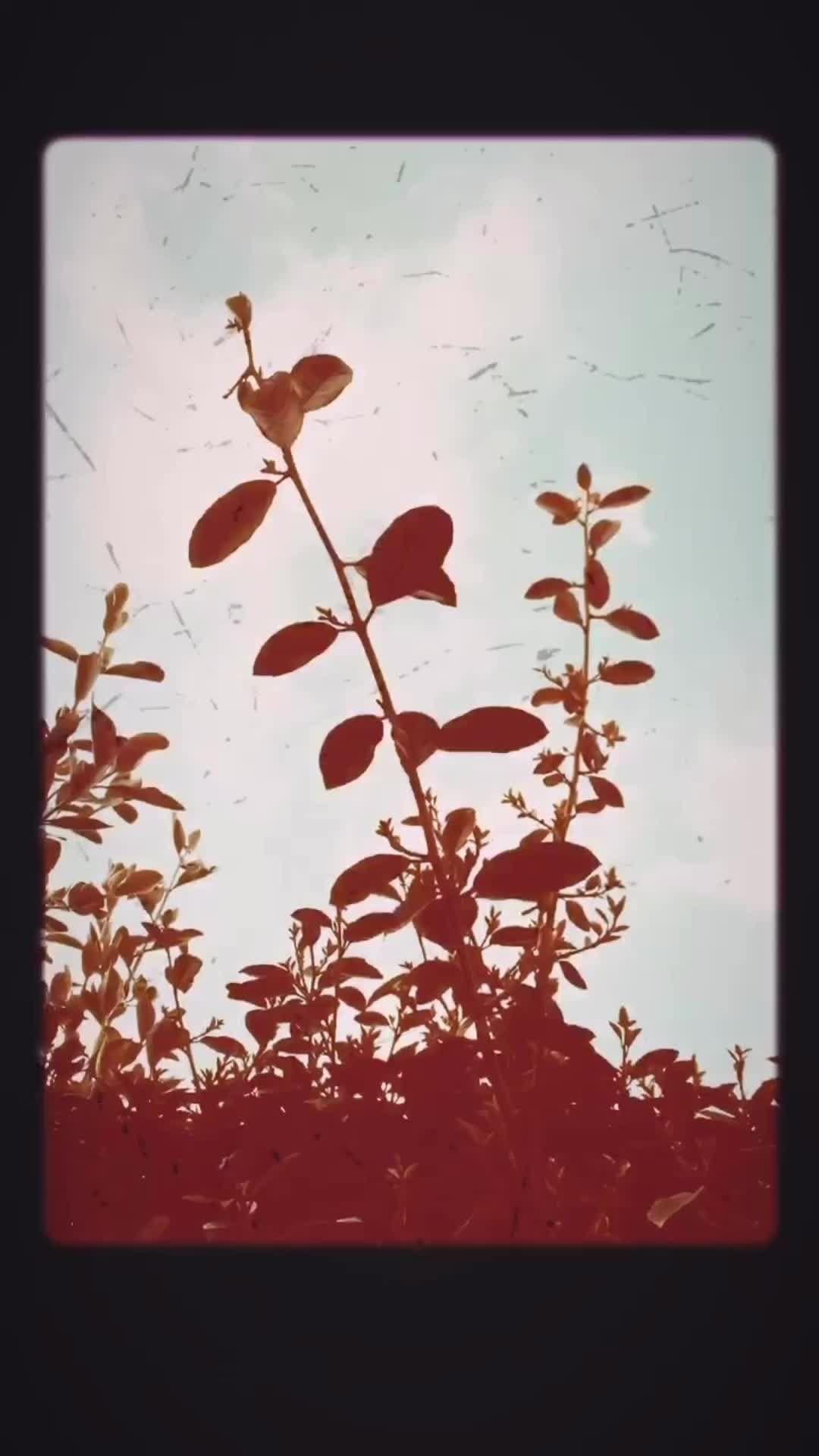 basilidebaptiste Instagram filter Stereoscopic