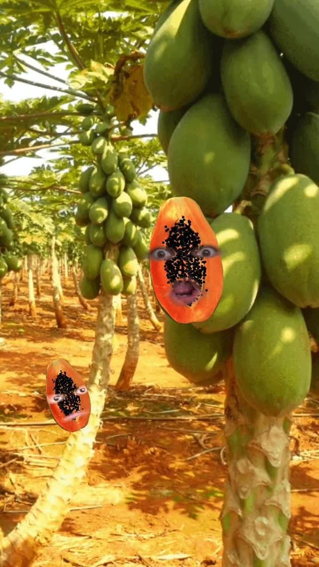 Instagram filter Papaya