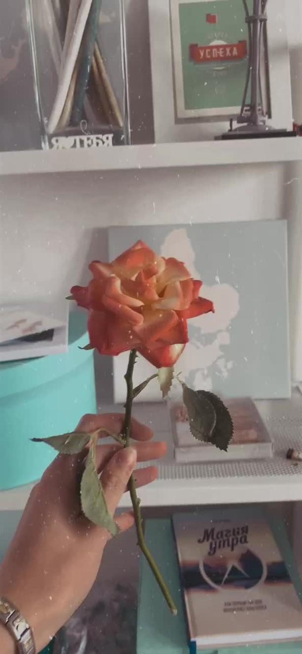 kristians_dream Instagram filter RetroCam1