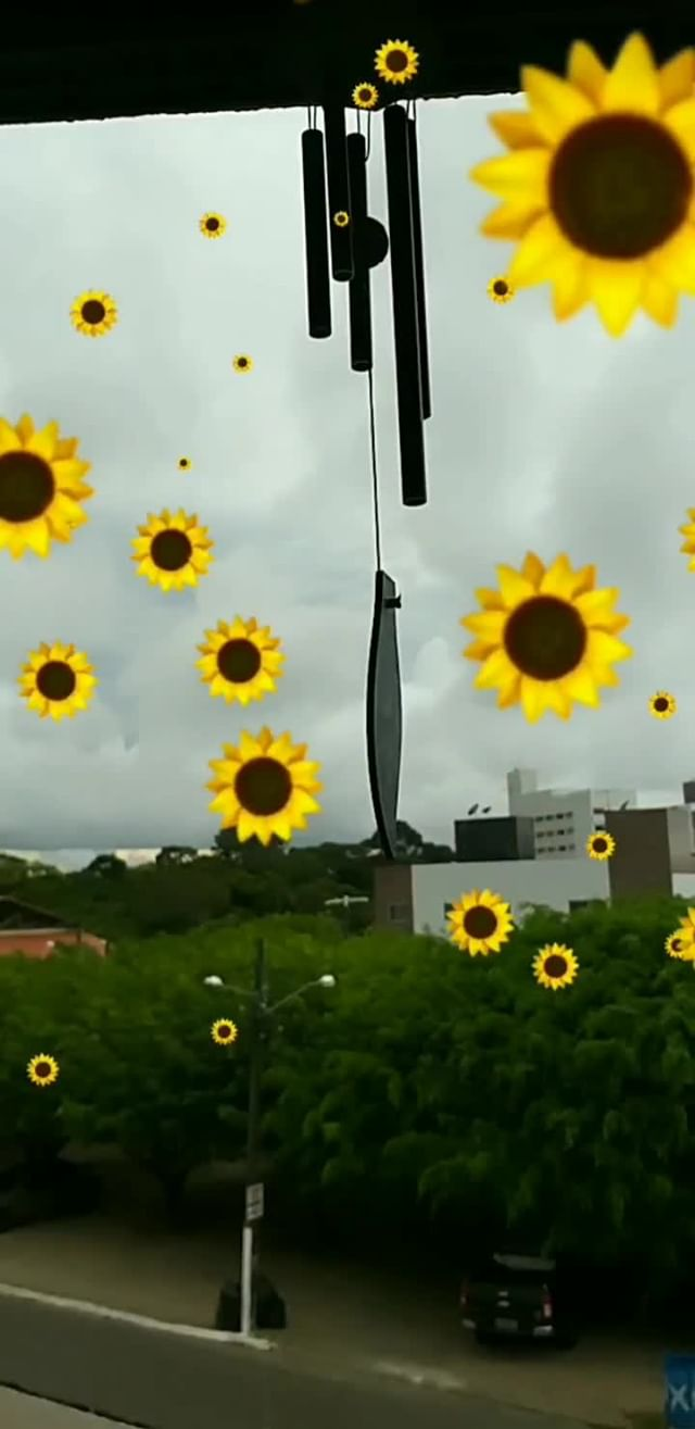 Instagram filter Sunflowers