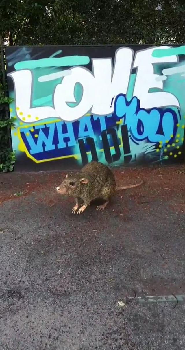 dylongfiala Instagram filter RAT