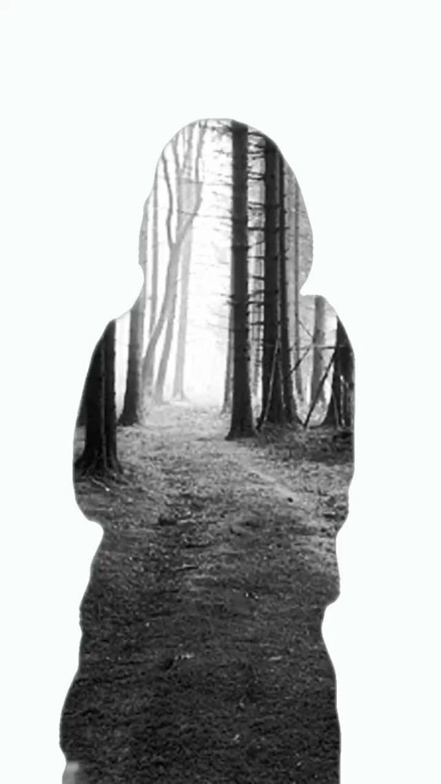 Instagram filter Silhouette Forrest