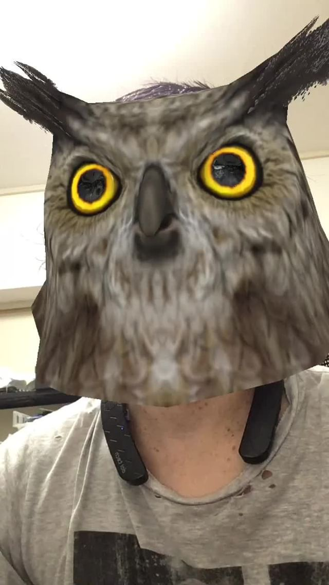 Instagram filter AnimalHead-Owl