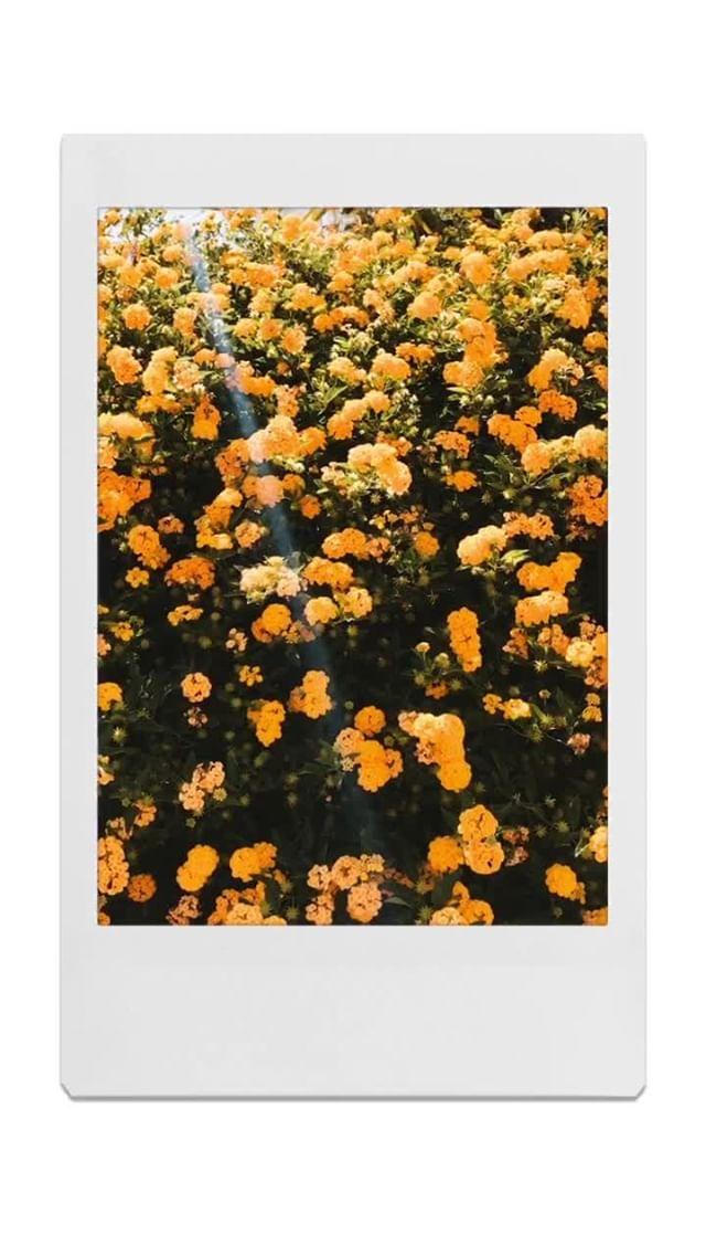 Instagram filter Polaroid Frames