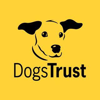 dogstrust Instagram filters profile picture