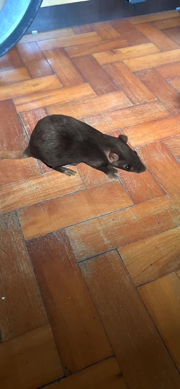Instagram filter ratinho™