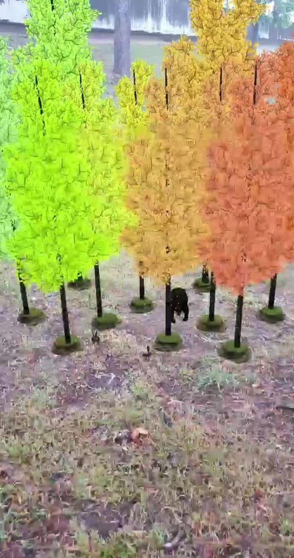 Instagram filter Tranquil Forest