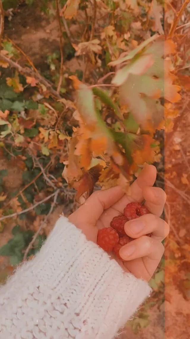 Instagram filter Warm&Cozy Autumn
