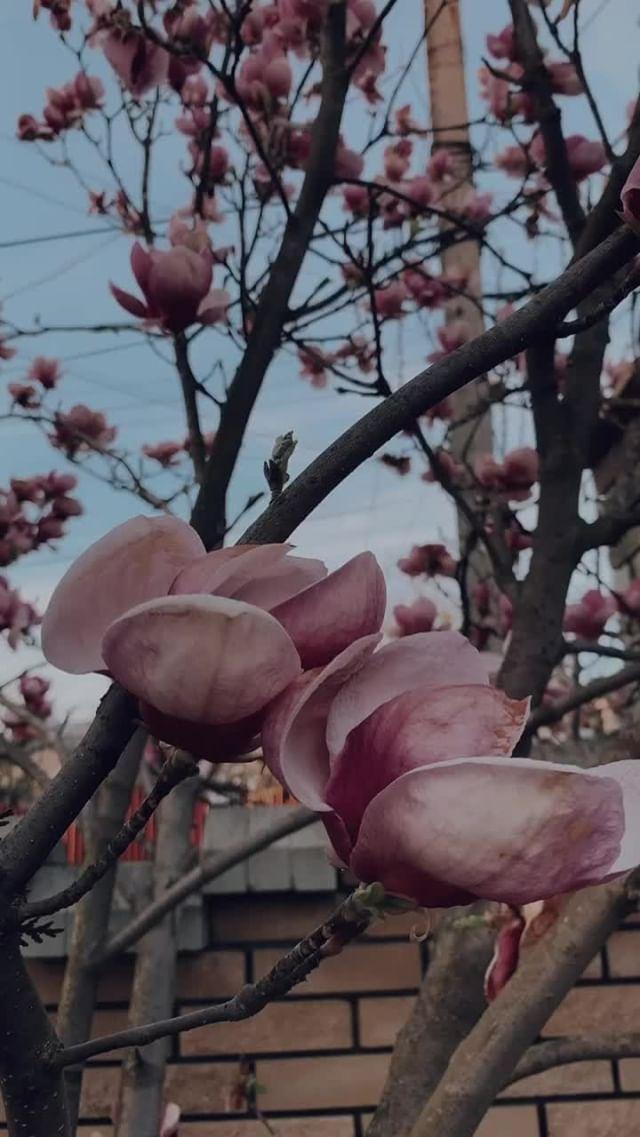 Instagram filter magnolia