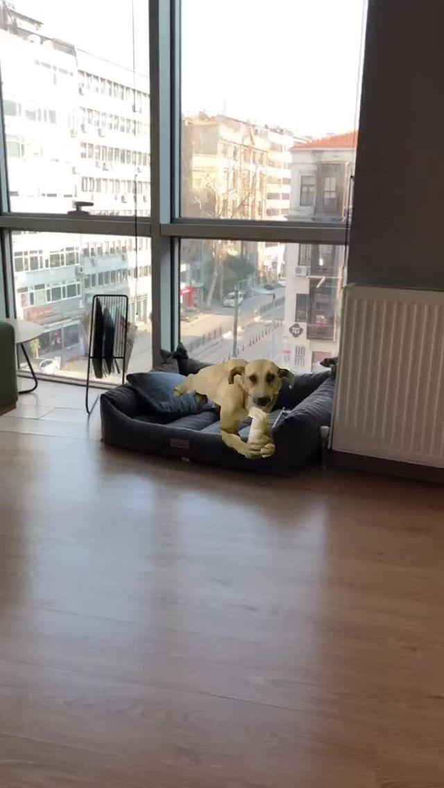 twenycrows Instagram filter ekmek köpek