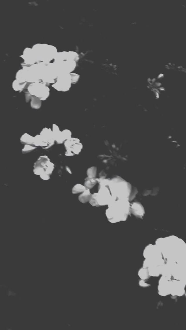 martin.minteguiaga Instagram filter TRANSITION