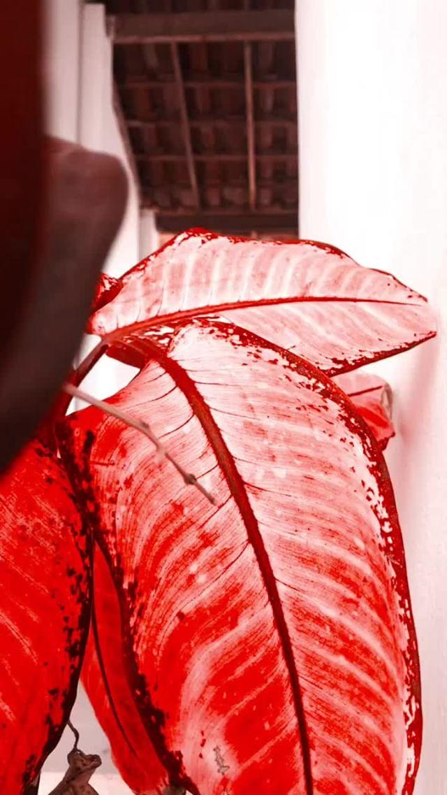 Instagram filter Color LUT Red