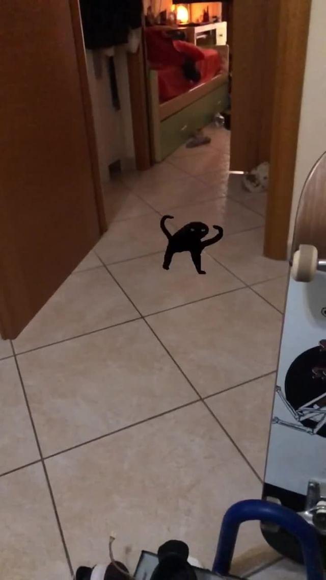 Instagram filter Cursed Cat