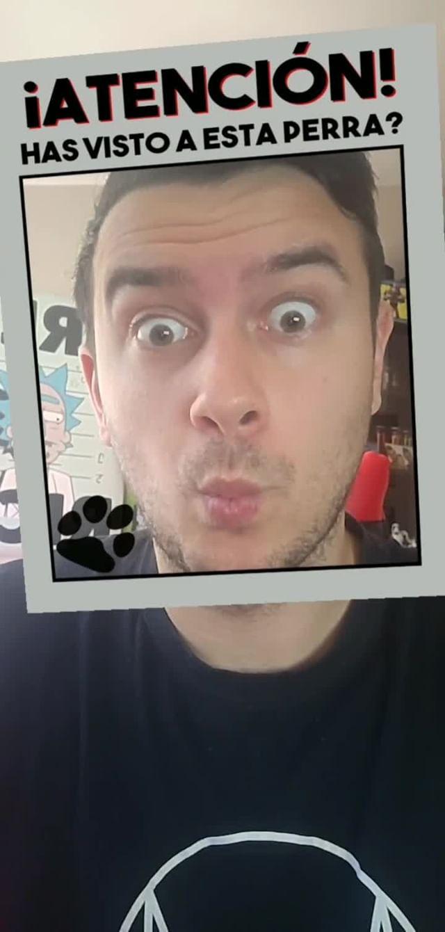 Instagram filter lost dog