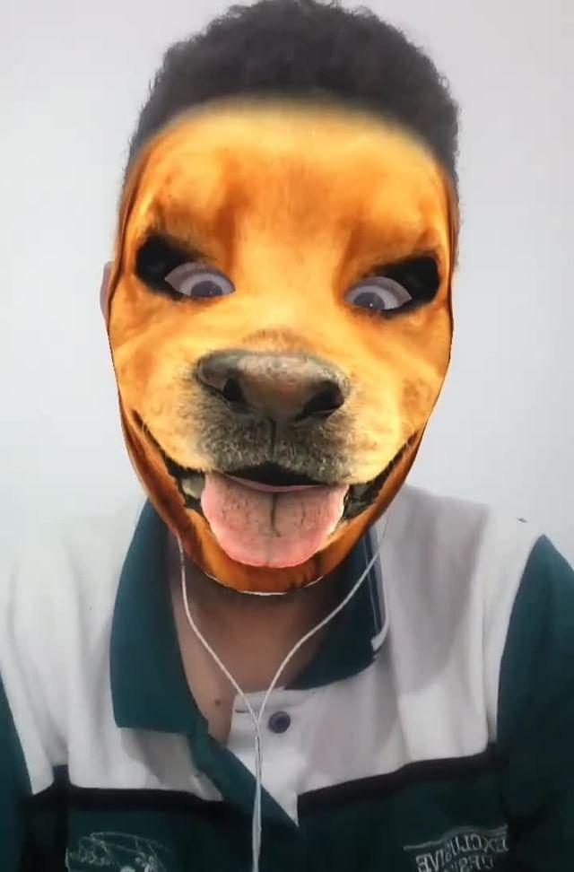 Instagram filter Happy dog