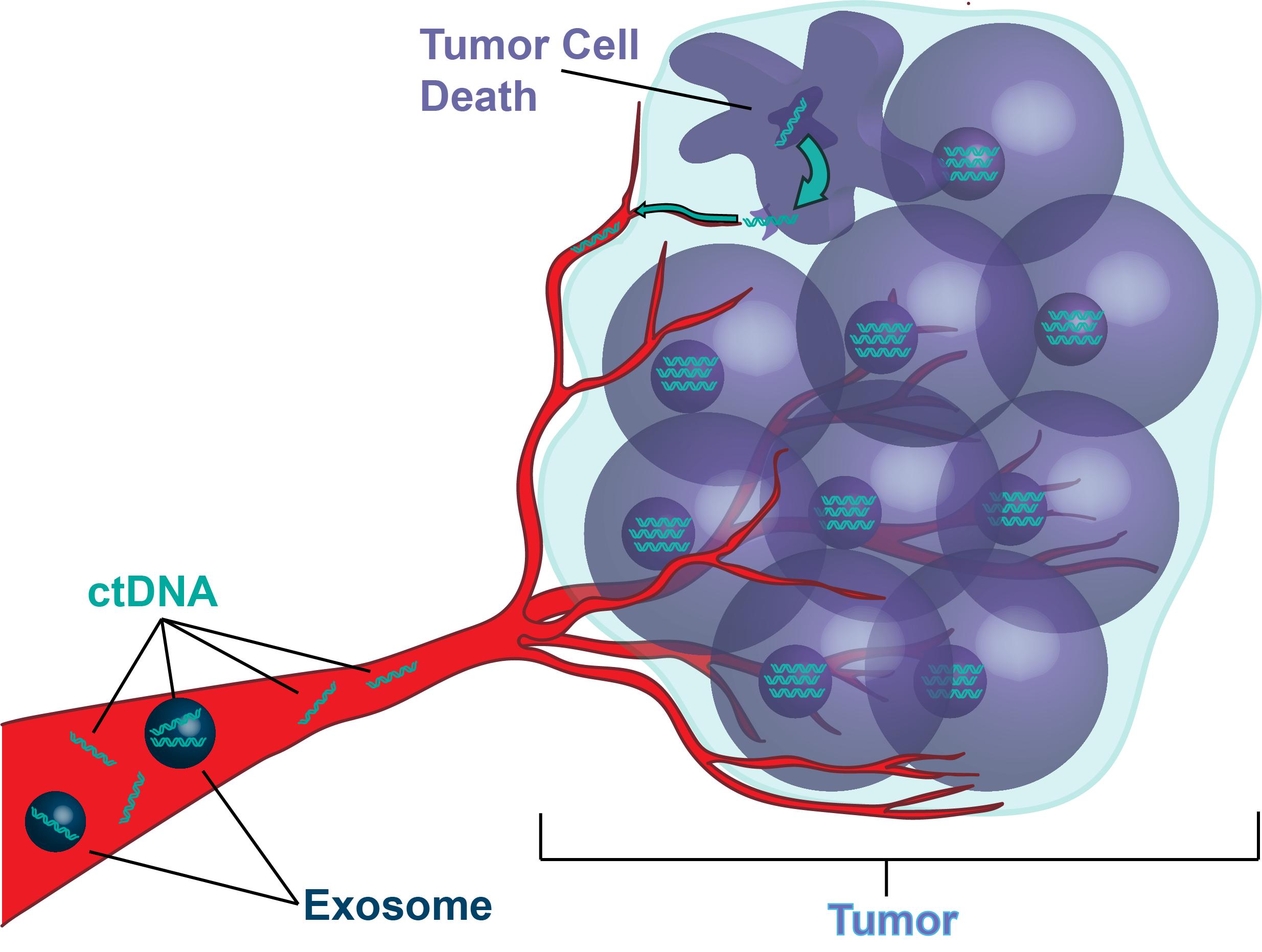 CT DNA Sketch