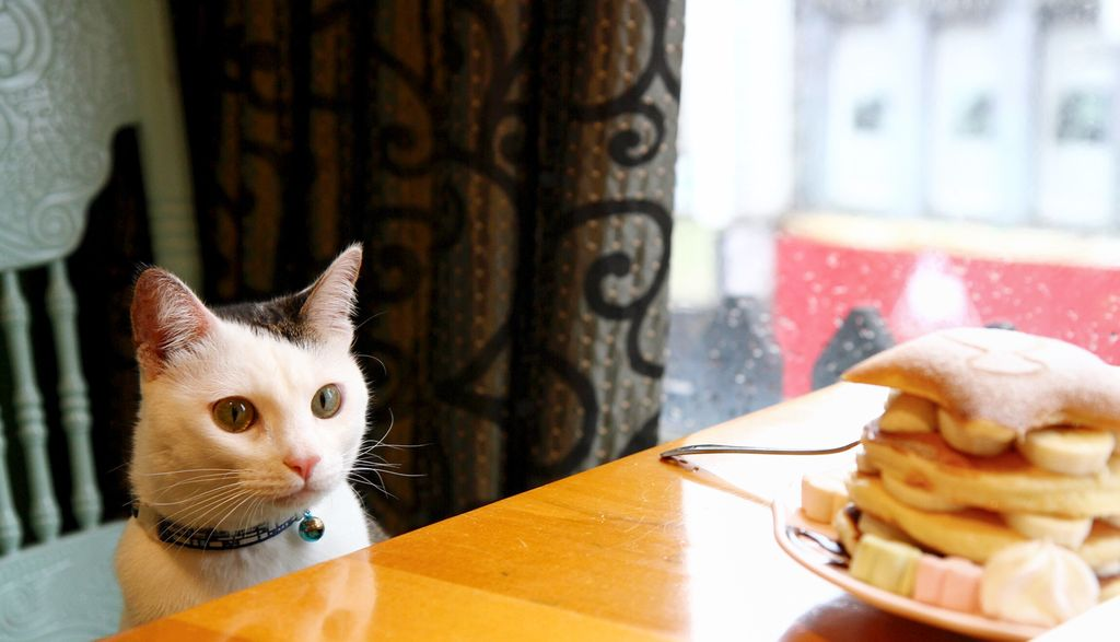 貓小路 cafe